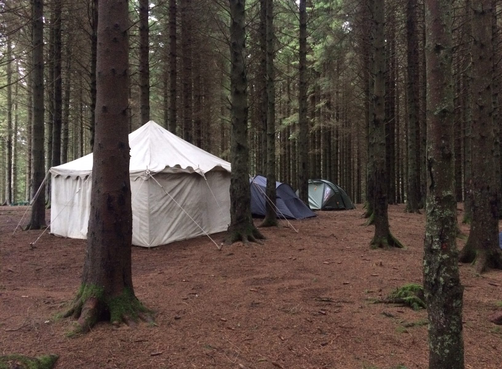 Tents in the trees